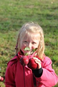 Apfelernte101